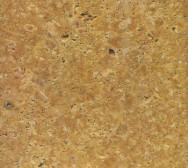 Amorillo Fossil
